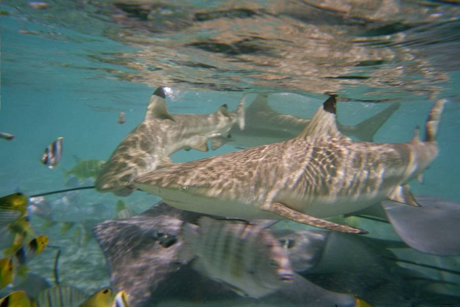 an analysis of shark feeding activities in florida The sandoway discovery center animal adoption program is a great way to help care and feed one animal of your choice for one year when you sponsor an animal your gift goes directly to support the professional care of your adopted animal.