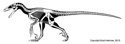 Scott Hartman's Deinonychus Skeleton Drawing