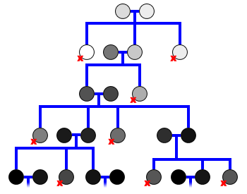 Evolution Conceptual Family Tree - Single Lineage
