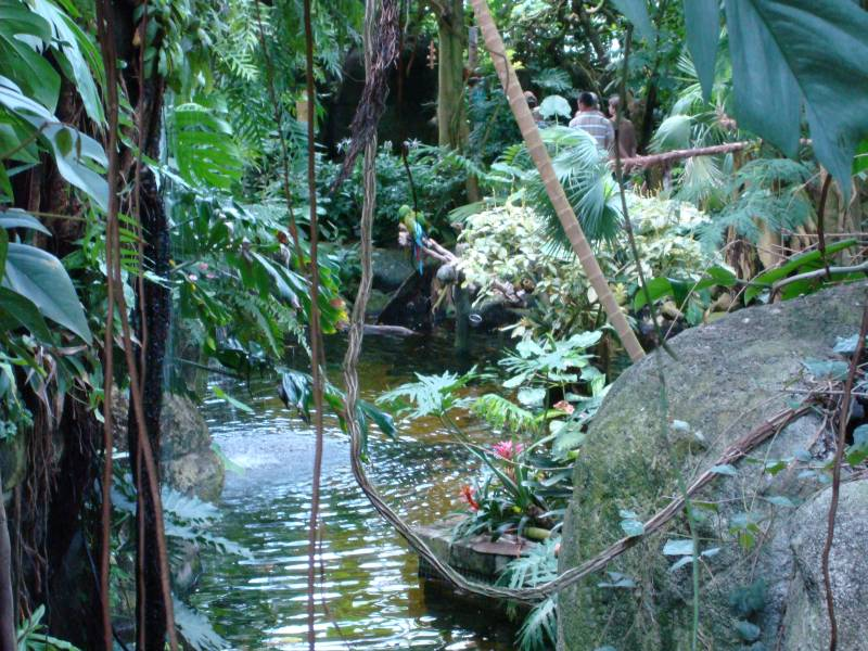 moody gardens galveston texas travel featured. moody gardens in ...
