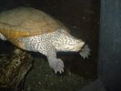 Turtle at National Aquarium reduced