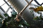 Sloth at National Aquarium